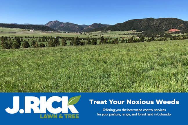 Noxious Weeds Postcard front