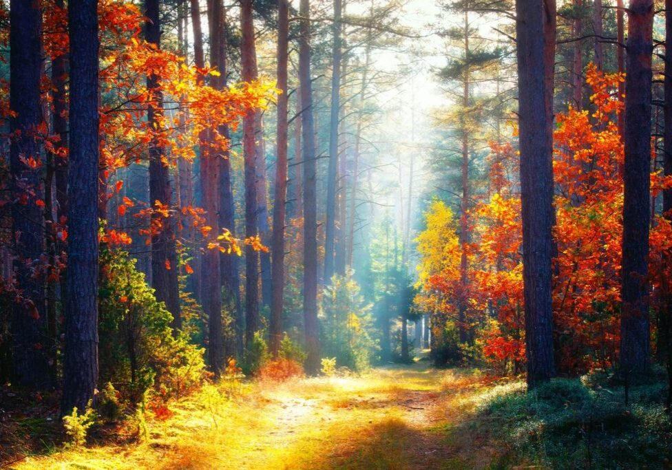 Autumn forest with colorful leaves and bright sunbeam